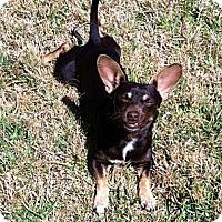 Adopt A Pet :: Carlos - Kingwood, TX