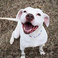 Adopt A Pet :: Shelby - Dallas, GA