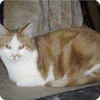 Adopt A Pet :: Sallee - Adoption Pending! - Colmar, PA