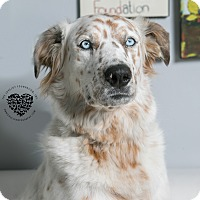Adopt A Pet :: Sugar Spice - Inglewood, CA