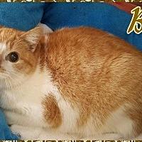 Adopt A Pet :: BC - Lagrange, IN