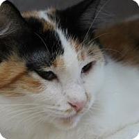 Adopt A Pet :: Trixie - Encinitas, CA