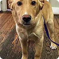 Adopt A Pet :: Chuck - BIRMINGHAM, AL