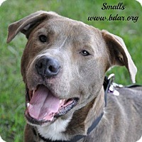 Adopt A Pet :: Smalls - Cheyenne, WY