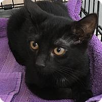 Adopt A Pet :: Maggie - East Brunswick, NJ