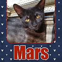 Adopt A Pet :: Mars - Orange, CA