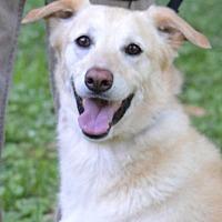 Adopt A Pet :: Chloe - White Plains, NY