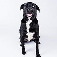 Adopt A Pet :: Lacie - Decatur, GA