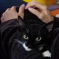 Adopt A Pet :: Alex - New York, NY