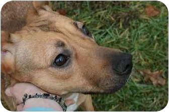Shepherd (Unknown Type) Mix Dog for adoption in Saint Charles, Missouri - Lindy