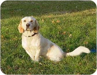 Basset Hound Mix Dog for adoption in Austin, Minnesota - Tassel