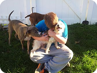 Wirehaired Fox Terrier/Terrier (Unknown Type, Small) Mix Dog for adoption in Mechanicsburg, Pennsylvania - Benji