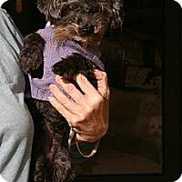 Adopt A Pet :: Phoebe - Cantonment, FL