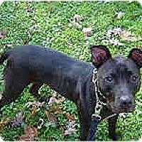 Adopt A Pet :: Kelly - Hoffman Estates, IL