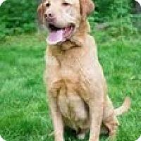 Adopt A Pet :: Brando - Lewisville, IN