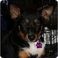 Adopt A Pet :: Michaela - Arlington, TX