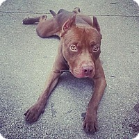 Adopt A Pet :: Lee - Owasso, OK