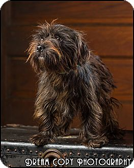 Terrier (Unknown Type, Small) Mix Dog for adoption in Owensboro, Kentucky - Franklin