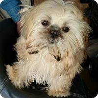 Adopt A Pet :: Starla - Southeastern, KS