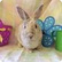 Adopt A Pet :: Karamel - Paramount, CA