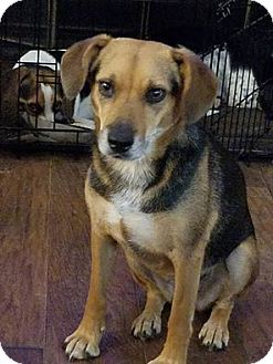 Hound (Unknown Type) Mix Dog for adoption in Cookeville, Tennessee - Violet