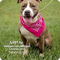 Adopt A Pet :: Unique - RESCUED! - Zanesville, OH