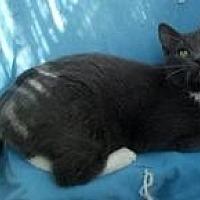 Adopt A Pet :: Shye - Calimesa, CA