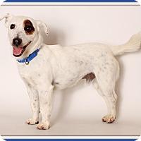 Adopt A Pet :: Meatloaf - Glendale, AZ