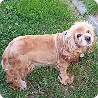 Adopt A Pet :: Daisy J 17066 - Parker, CO