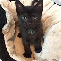 Adopt A Pet :: Blossom - Columbus, OH