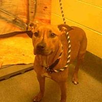 Adopt A Pet :: SASSY - Upper Marlboro, MD