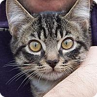 Adopt A Pet :: Pete - Irvine, CA