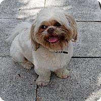 Adopt A Pet :: Suki - Minneola, FL