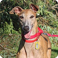 Adopt A Pet :: Todd - Carlsbad, CA