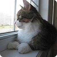 Adopt A Pet :: Jade - Halifax, NS