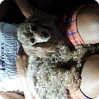 Adopt A Pet :: CC - Denver, IN