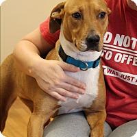 Adopt A Pet :: Rosie - Homewood, AL