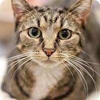 Adopt A Pet :: Primm - Sacramento, CA