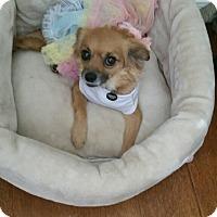 Adopt A Pet :: Cheeki - conroe, TX