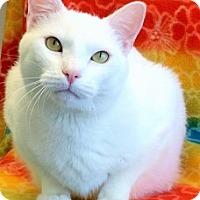 Adopt A Pet :: Mac - Colorado Springs, CO