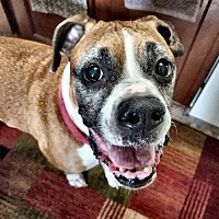Adopt A Pet :: Angel - Troy, MI