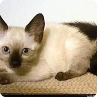 Adopt A Pet :: Peek a Boo - San Jacinto, CA