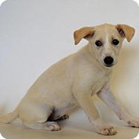 Adopt A Pet :: HALEY - New Iberia, LA
