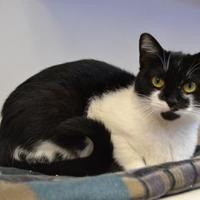 Adopt A Pet :: River - Elkhorn, WI