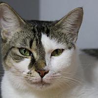 Adopt A Pet :: Mamacita - Sarasota, FL