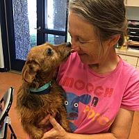 Adopt A Pet :: Winnie - Lubbock, TX