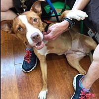 Adopt A Pet :: Rosebud - Park Ridge, NJ