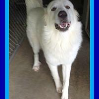 Adopt A Pet :: RAIDER - Allentown, PA