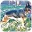 Photo 1 - German Shepherd Dog Mix Dog for adoption in Denver, Colorado - Referral - Sasha