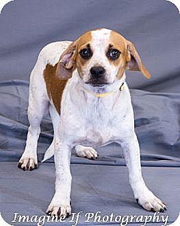 Dachshund Mix Dog for adoption in Crescent, Oklahoma - Flash